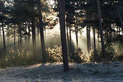 Zonnestralen verwarmen winters landschap