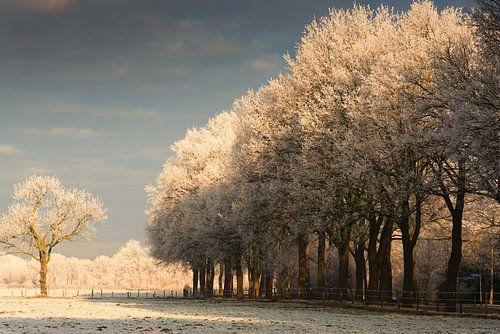 Magisch winterlicht