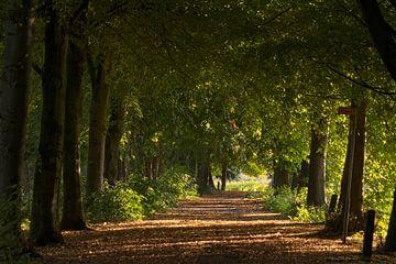 Allee vom Linden im Broekpolder in der warmen Morgensonne von Bas Ronteltap