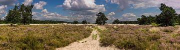 Loonse en drunense duinen von Jan Heijmans
