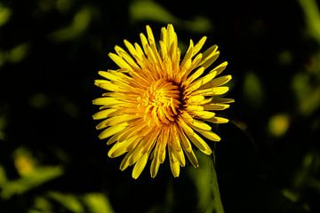 Blume in der Sonne von Michael van Eijk