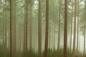 Mistig dennenbomen landschap tijdens een mistige herfstdag van Sjoerd van der Wal