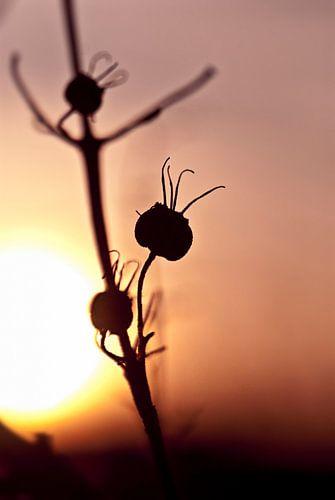 Zonsondergang in de herfst van Isabel Alba Gonzalez