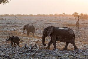 Olifanten en een giraffe in Etosha, Namibia van