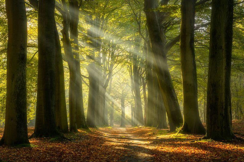Zonnestralen in het bos van Ellen van den Doel