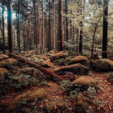 Herbstwald 001 von Oliver Henze