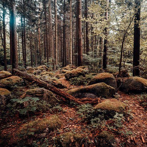 Herbstwald 001 van Oliver Henze