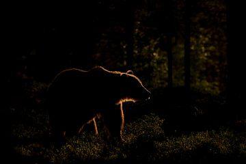 Bär mit Hintergrundbeleuchtung von Larissa Rand