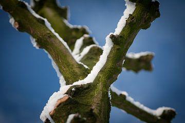 Wilg met sneeuw (Kleur) von Arthur van Iterson