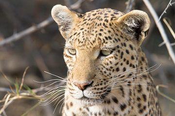 Portrait d'un léopard sur Angelika Stern