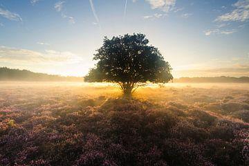 Magie auf dem Moor von Arjan Keers