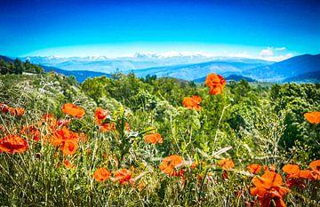 Pyreneeën  van
