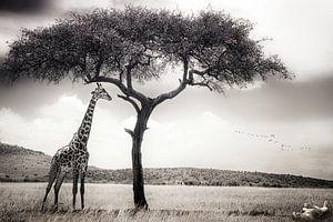 unter der afrikanischen Sonne, Piet Flour