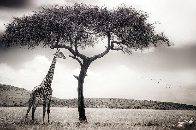 unter der afrikanischen Sonne, Piet Flour von 1x