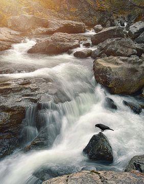 Le corbeau et la chute d'eau sur Anam Nàdar