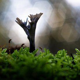 Comptoir de champignons bokeh lumineux sur Gerwin Hoogsteen