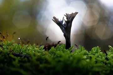 Comptoir de champignons bokeh lumineux