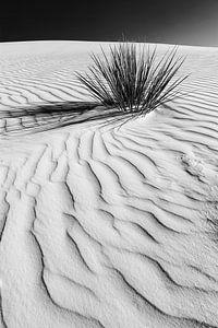 Dünen, White Sands National Monument | Monochrom