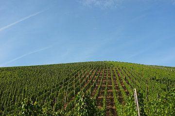 De wijngaard van Eliza Marx