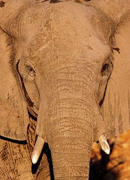 Elefant - Afrika wildlife von W. Woyke