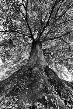 De kracht van een boom in zwart-wit van iPics Photography