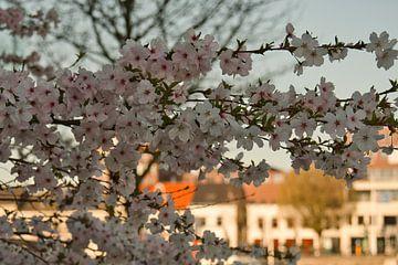 Wetter unter der japanischen Sakura-Frühlingsblüte von J..M de Jong-Jansen