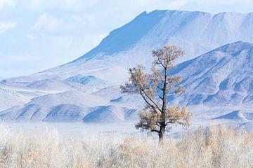 Un arbre isolé en Mongolie sur Nanda Bussers