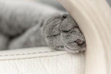 Schlafende Katzenpfoten von Jefra Creations