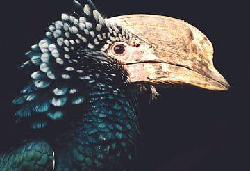 Neushoornvogel - Hornbill, prachtige Vogel met indrukwekkende snavel en prachtige Veren van Hendrik Jonkman
