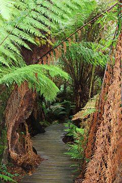 Dschungel Great Ocean Road