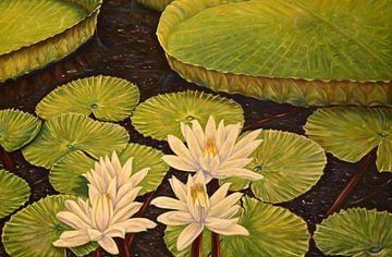 Victoria Regia, reusachtige waterlelie op de Amazone... van David Morales Izquierdo