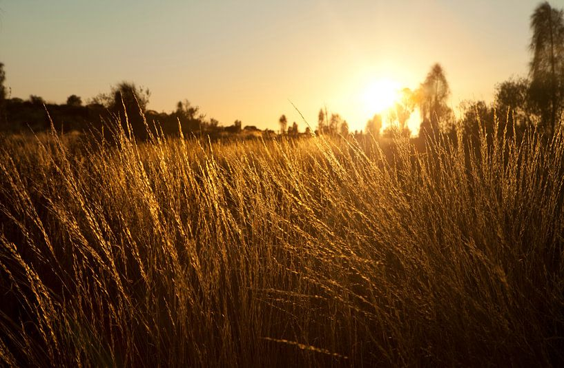 Guwing (Sun) van Mike van den Brink