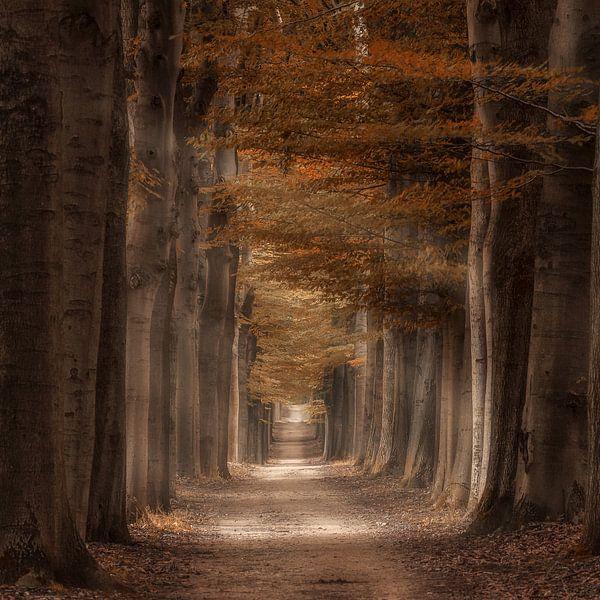 Autumn light van Rigo Meens