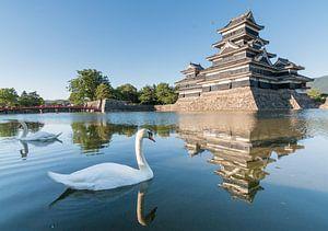 Zwanen bij het Matsumoto kasteel in Nagano (Japan).