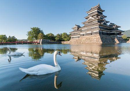 Swans at the Nagano Castle