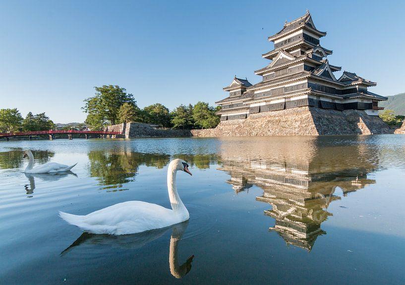 Swans at the Nagano Castle van Claudio Duarte