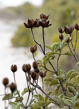 Prachtige natuurfoto in koffietinten gemaakt in Puglia van Bianca ter Riet