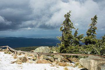 Landscape with snow and trees van Rico Ködder