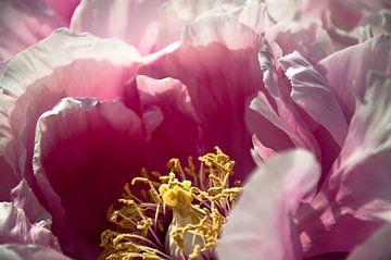 Rosy sur Sonja Pixels