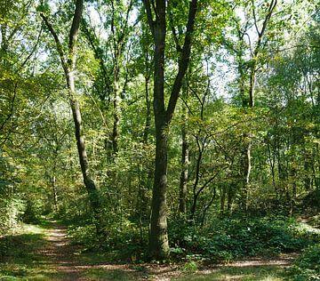 Wald an einem sonnigen Tag im Spätsommer von Wim vd Neut