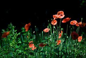 Diep rode bloemen