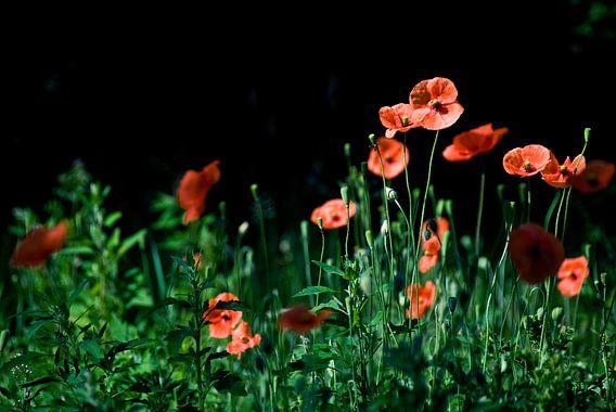 Diep rode bloemen van Mariska Hofman