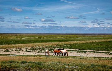 Pferde außerhalb des Wattenmeeres von Jan Sportel Photography