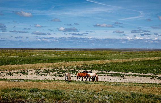 Paarden buitendijks waddengebied van Jan Sportel Photography