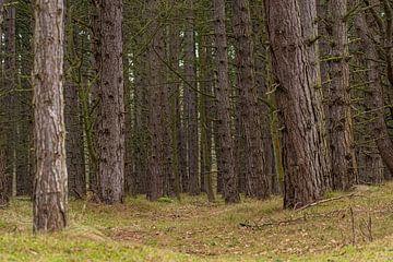 Bomen Amsterdamse Waterleidingduinen van Merijn Loch