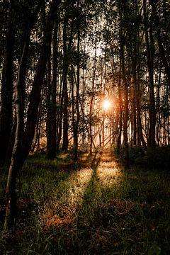 Sonnenlicht fällt durch die Bäume im Leeuwarder Bos auf das Gras von Nando Foto