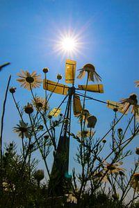 Voorjaar bij het windmolentje