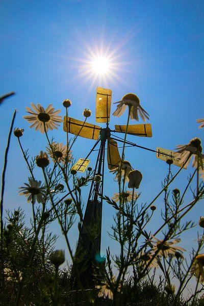 Voorjaar bij het windmolentje van Nathalie Pol