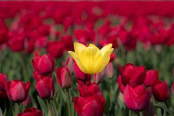 Rood en geel van Moetwil en van Dijk - Fotografie