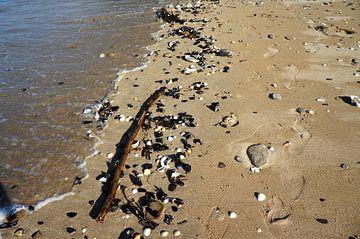 Schelpen op het strand Bretagne van